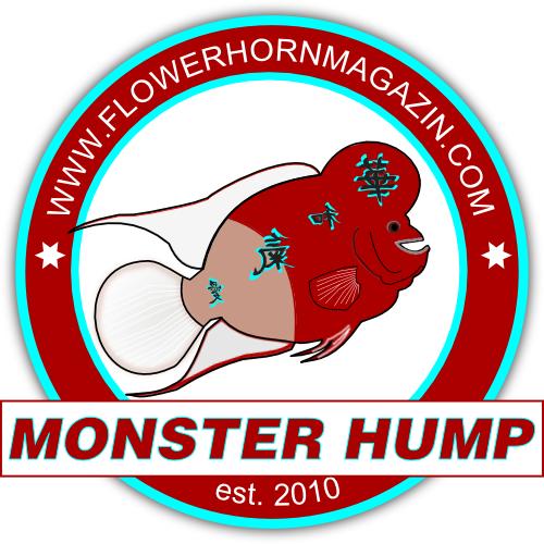 Flowerhorn Futter Monster Hump